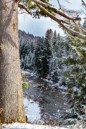 snow forest river