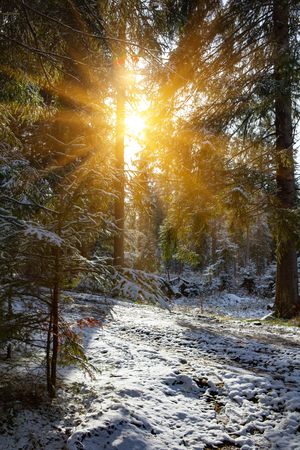 snow sunny forest trees
