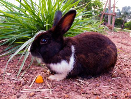 graden: black and white rabbit in the graden