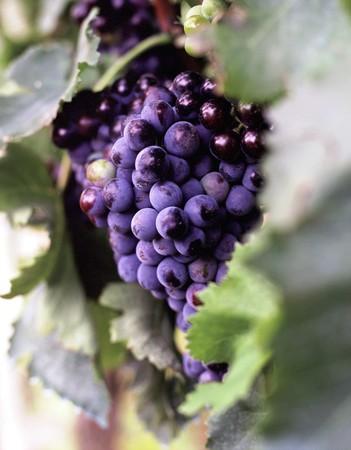ebro: Rioja vigneti sul fiume Ebro dalla sorgente al mare. Spagna