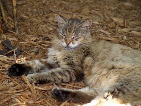 hemingway: Hemingways cat in Key West