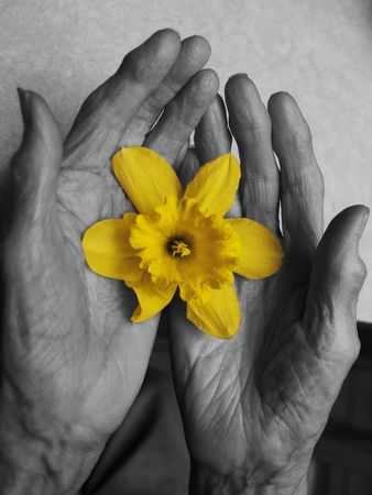 Old hands and the flower    photo