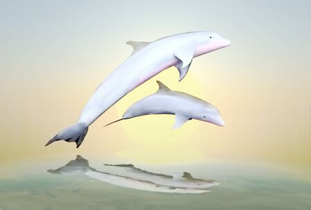 unexplored: Cheerful game, the family of dolphins against a background of the sunset.