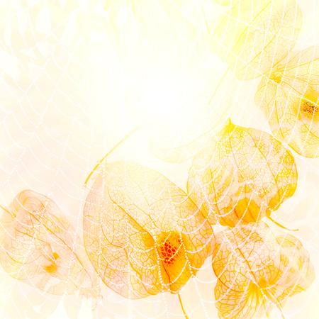 cape gooseberry: Abstract image of the sun. Sun, web, cape gooseberry, yellow abstract background.