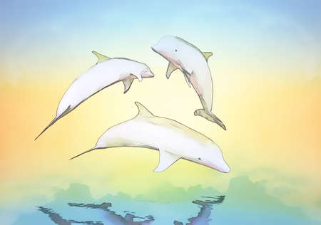 sky dive: Cheerful game, the family of dolphins against a background of the sunset.