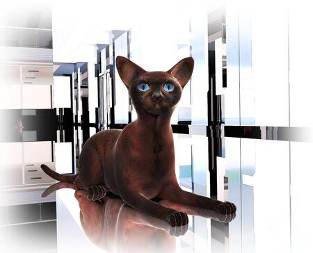 proud: proud burmese cat