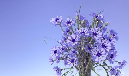 cornflowers: Cornflowers in blue sky background. 3D illustration
