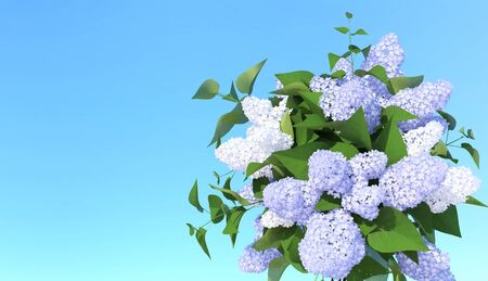 Blooming light blue lilac flowers. 3D illustration