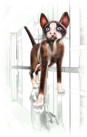 blue siamese cat: siamese cat