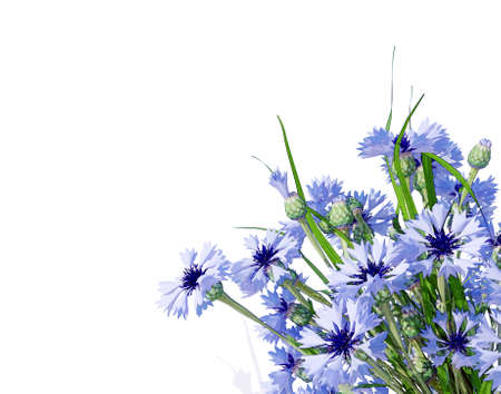 posy: Cornflower. Flower bouquet. Wildflower posy isolated on white.