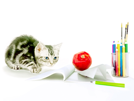 Education background concept with a kitten. Back to school. Stock Photo
