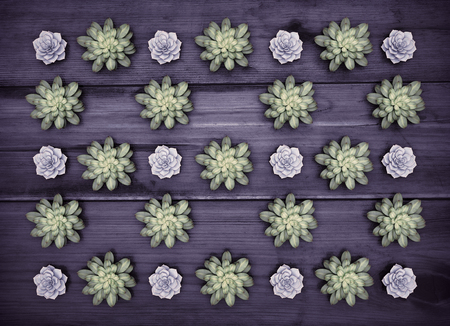 Plants on black wooden background. Abstract background.