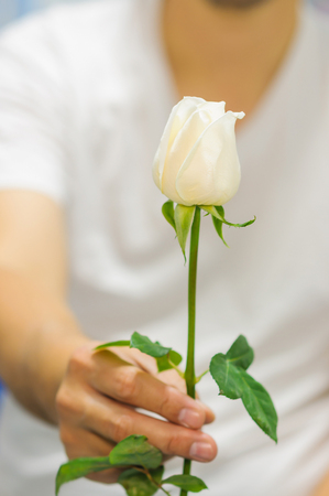 rose photo: A man is giving white rose. Photo is focus at the rose Stock Photo