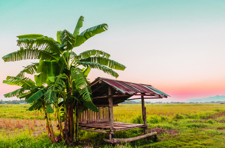 Small hut with banana tree in rural agricultural area of Thailand with rose quartz and serenity sky and mountain background