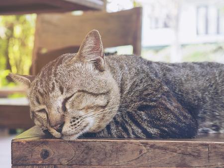 사랑스런 게으른 고양이 타이 집 애완 동물