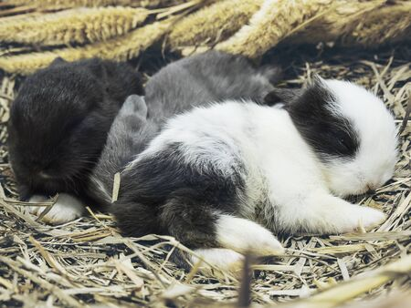 Small lovely14 day little local Thai rabbits