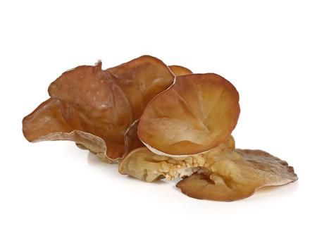 jews: Jews Ear Mushroom isolated on white. Stock Photo