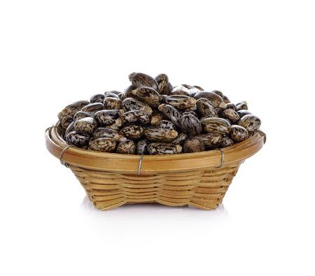 ヒマシ油種子 - 白地トウゴマ 写真素材 - 51732456