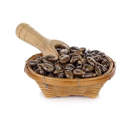 ヒマシ油種子 - 白地トウゴマ 写真素材