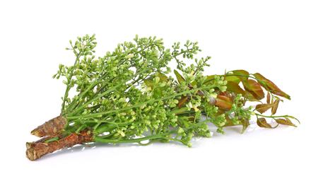 quinine: Siamese neem tree, Nim, Margosa, Quinine (Azadirachta indica A. Juss. Var. Siamensis Valeton)