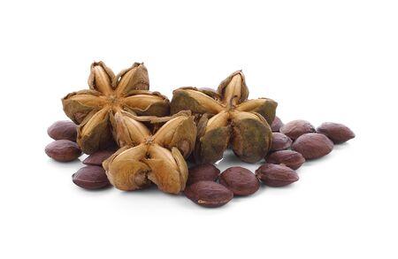 volubilis: Plukenetia volubilis, commonly known as sacha inchi or Inca peanut.