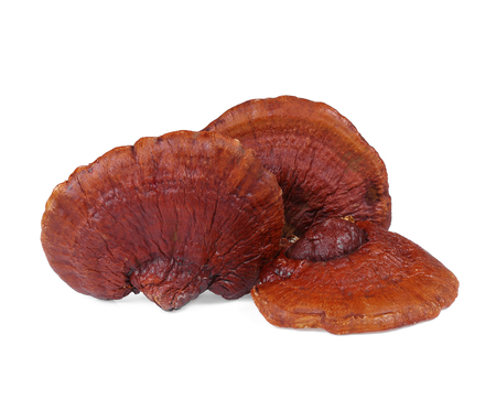 Lingzhi Mushroom Ganoderma Lucidum Isolated on white background. 写真素材