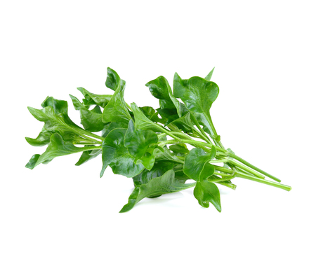 watercress isolated on white background