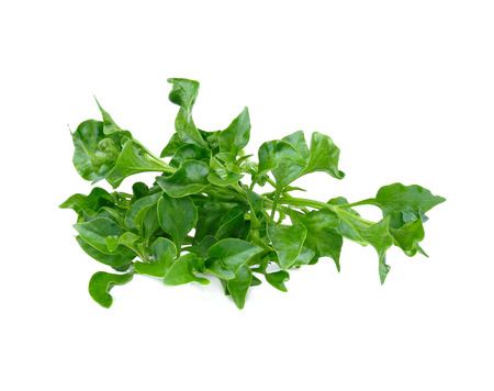watercress isolated on white background 写真素材 - 110576838