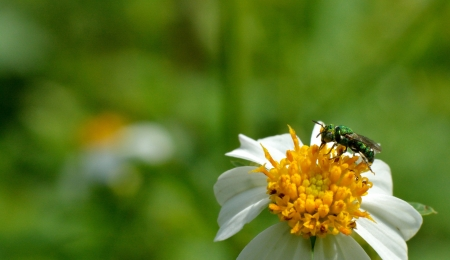 A green insect on flower