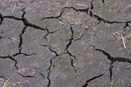 Cracked ground  Stock Photo