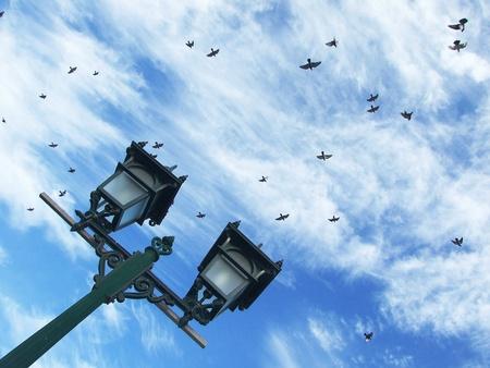 Birds filled the sky photo
