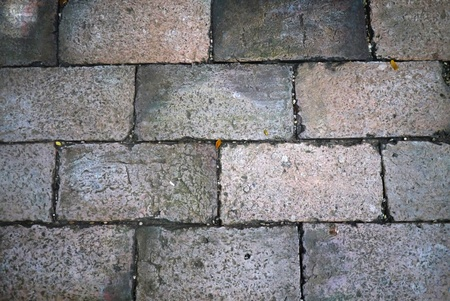 The brick walkway photo