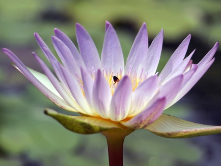 Lotus zoom camera Stock Photo - 13245018