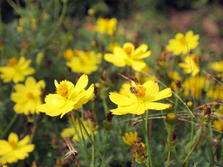 Field of flowers Stock Photo - 13249911
