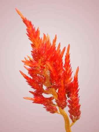 Close-up Flower Stock Photo - 13249901