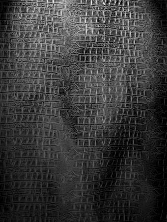 Black and white crocodile leather photo