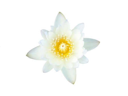 nelumbinis: White lotus, isolated, clipping path included  Stock Photo
