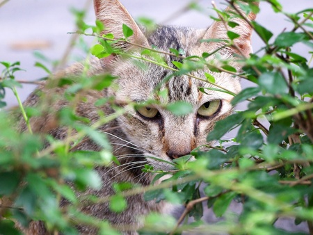 Cat is looking from behind a tree photo