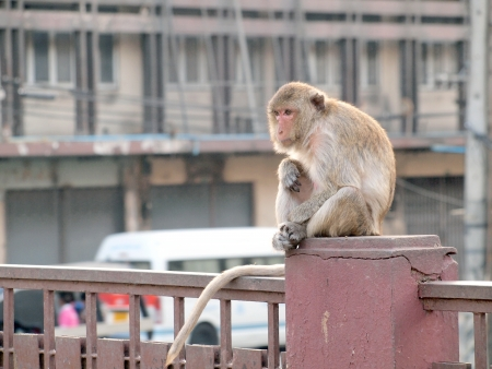anthropomorphism: Thinking monkey Stock Photo