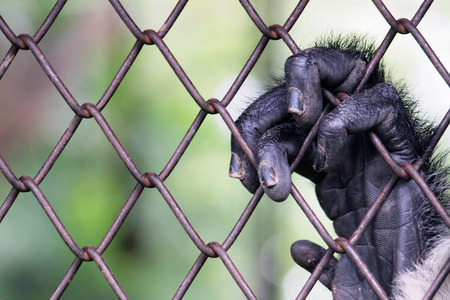 hand of lonely monkey on cage  photo