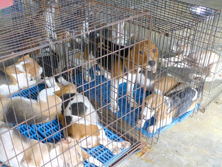 rescued: closeup of a dog cage