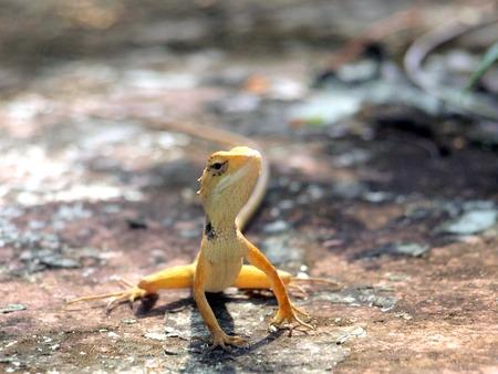 vivarium: dragon barbu