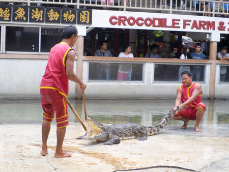 SAMUTPRAKARN,THAILAND -SEPTEMBER 8: crocodile show at crocodile farm on September 8, 2013 in Samutprakarn,Thailand. This exciting show is very famous amoung among tourist and Thai people