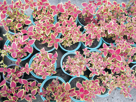 Potted seedlings growing in biodegradable peat moss pots photo
