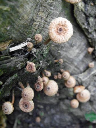 fungi woodland: Bunch of fungi grows on oak tree butt Stock Photo