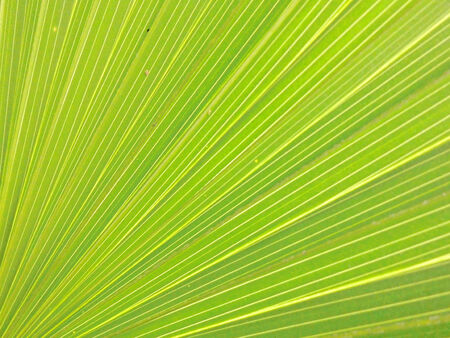 Close up of green leave texture
