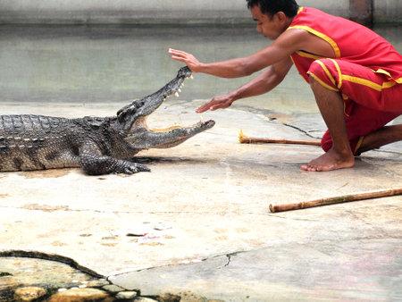 samutprakarn: SAMUTPRAKARN,THAILAND -SEPTEMBER 8: crocodile show at crocodile farm on September 8, 2013 in Samutprakarn,Thailand. This exciting show is very famous among among tourist and Thai people