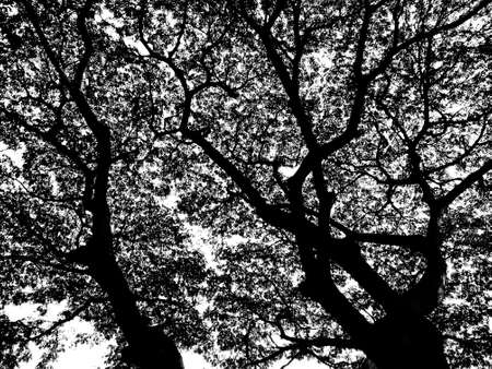 Silhouette tree  photo
