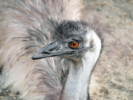 curiousness: A very expressive emu portrait at the zoo