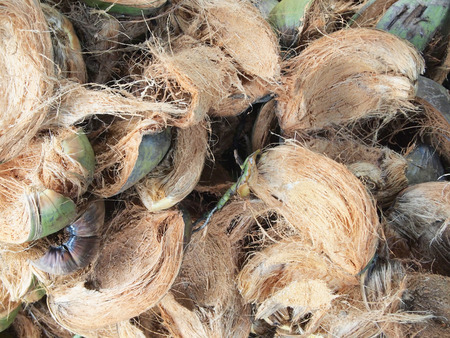 Coconut fiber photo
